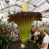 Visitors look at a blooming Titan Arum (Amorphophallus titanum), one of the world's largest and rare tropical flowering plants, at Basel's Botanical Garden September 29, 2014. The flower, which emits strong odour likened to rotting meat, which gives it it's common name 'corpse flower', wilts and dies after two days. Both the 'fragance' and the flower's meat-colouration attract pollinators - carrion flies and beetles. REUTERS/Arnd Wiegmann (SWITZERLAND - Tags: ENVIRONMENT SOCIETY)