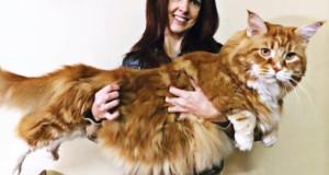 'World's longest cat'