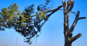tree-cutting-